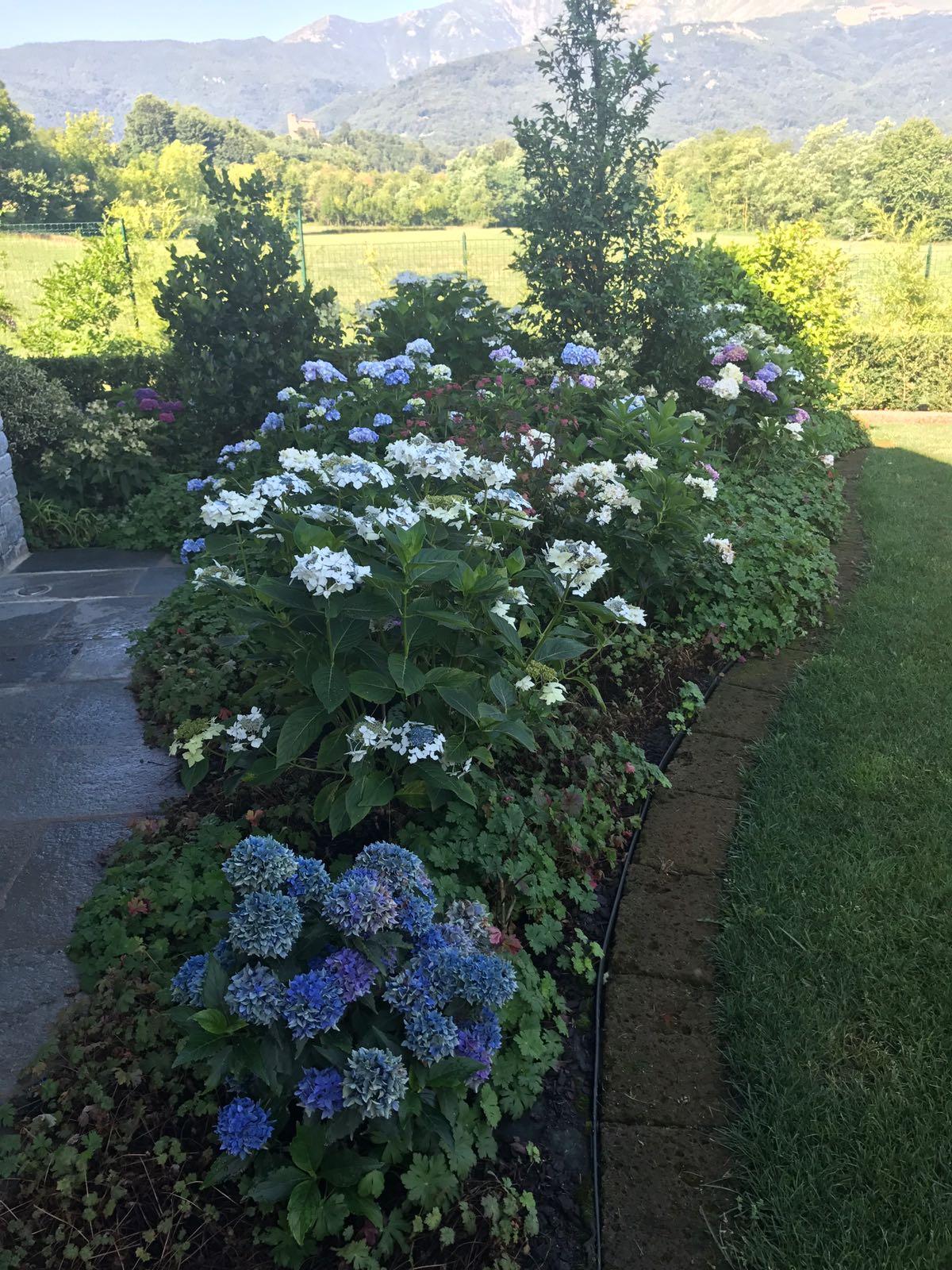 Piante Da Frutto Sempreverdi vivaio – crespo garden center – roletto (to)